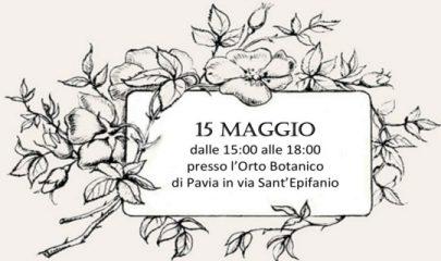 roseto banner