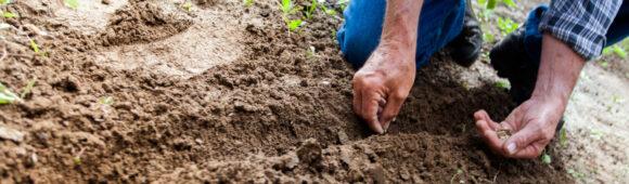 Progetto DIAGRAMMI nord – Diritti in Agricoltura attraverso approcci multistakeholder e multidisciplinari per l'integrazione e il lavoro giusto